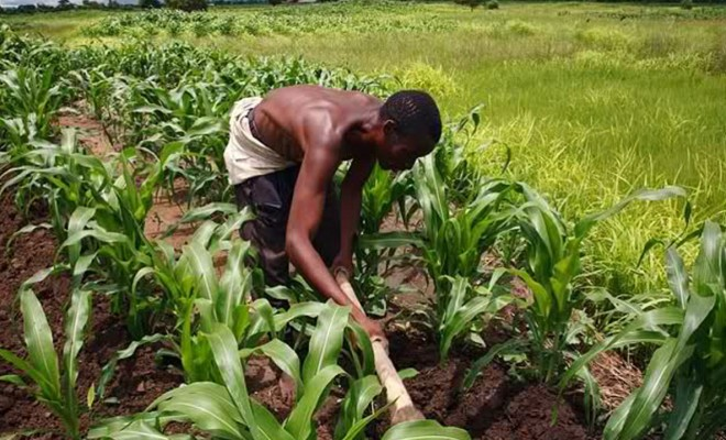 Agric Entrepreeurs