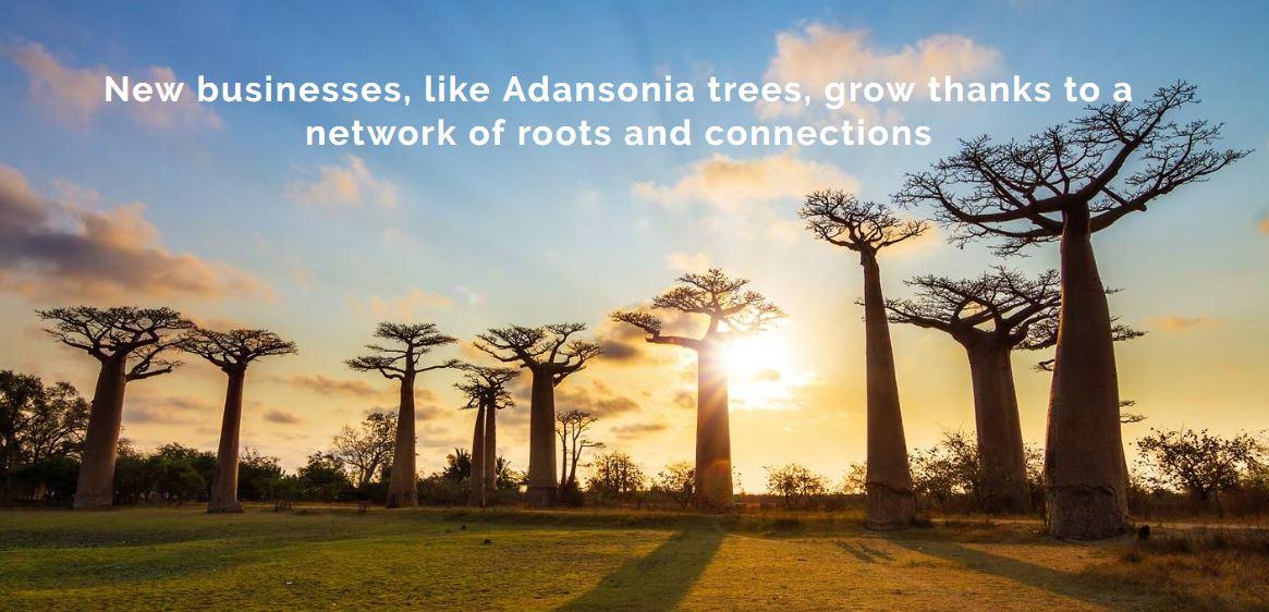 Do you need funding? Register for the Adansonia Accelerator Programme 2017 for African entrepreneurs